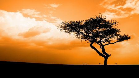kenya: African sunset with acacia tree