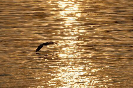Sunset on Lake Albert, Uganda photo