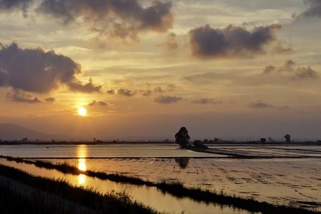 puesta de sol sobre arroz