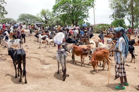 Bati, Etiopía, 1 de agosto, 2011 - mercado ganadero en bati, diversos grupos étnicos como los afar, oromo y amara vienen semanal para vender sus camellos, vacas y cabras. Editorial