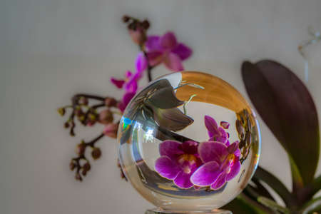 Mini orchid in glass ball