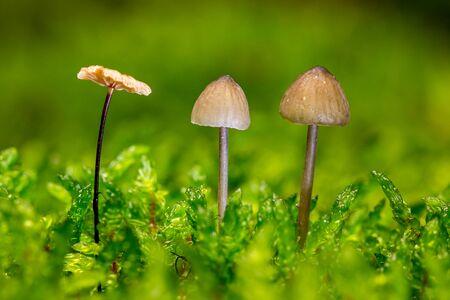 three small mushrooms in the moss