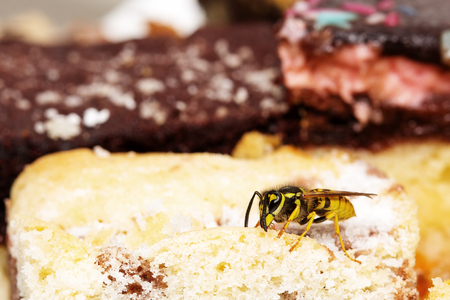 Wasp on cake