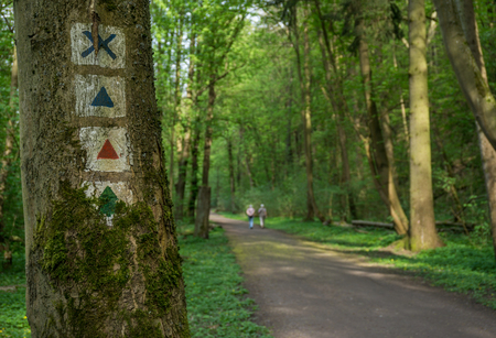 Hiking trail in the Thuringian Forest 写真素材