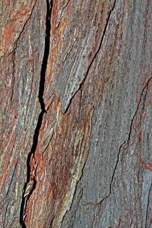 Wood texture Фото со стока
