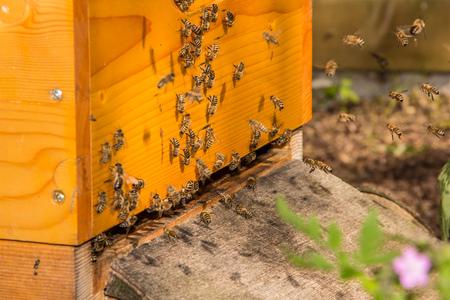 beehive Фото со стока