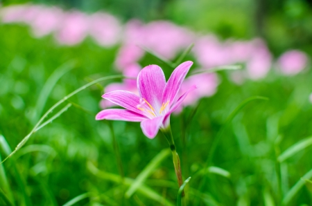 Beautiful pink flower in park photo