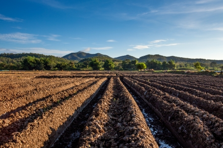 furrows: Prepare the planting The conversion of vegetable crops of farmers