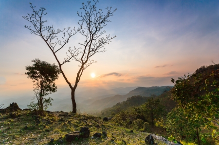 climate morning: The tree and beautiful sunset in thailand