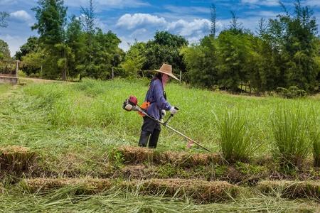 farmer is doing lawnmower Stock Photo
