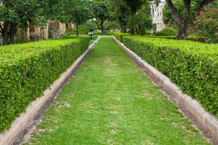 Green grass Pathway in a Lush Green Park