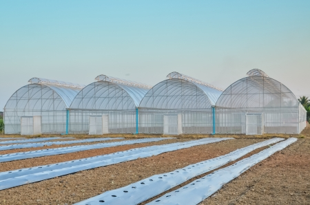 non urban scene: Empty greenhouse and farm field Stock Photo