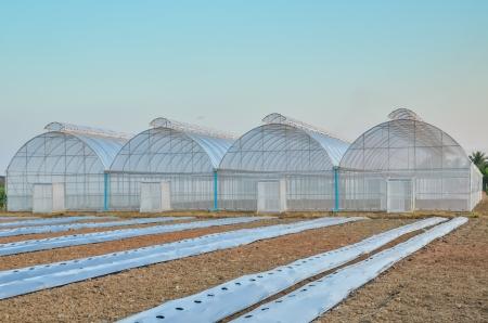 Empty greenhouse and farm field Standard-Bild