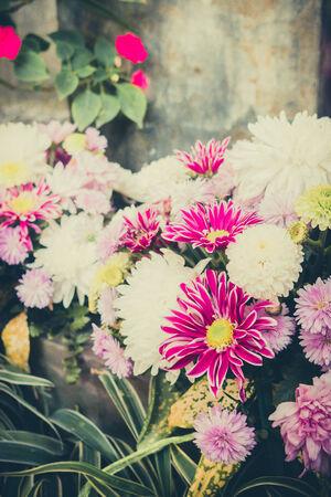 lindi: Beautiful flowers of chrysanthemums for vintage Stock Photo