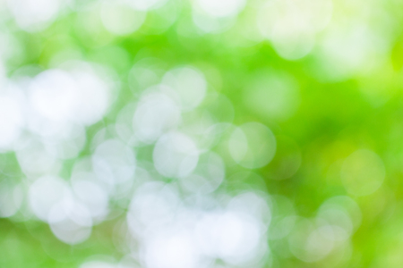 Green leaf boken blur for natural background photo