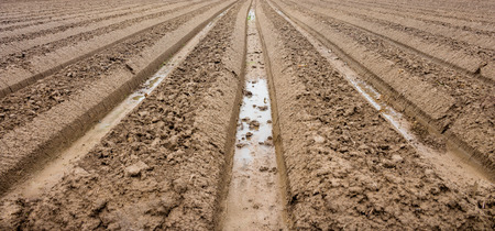 furrow: preparation soil for cultivation vegetable