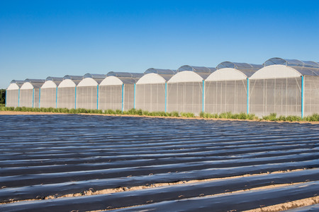 view for greenhouse with blue sky and field agriculture