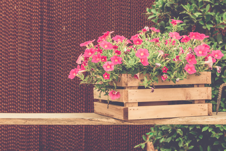 petunias: Pink petunia in pot on wood table with vintage effect. Stock Photo