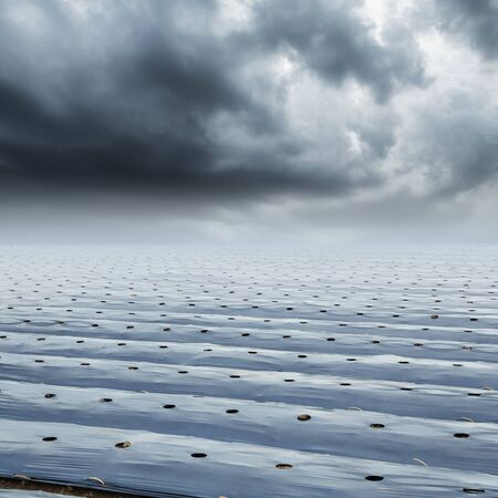 rainclouds: Field agriculture mulching film protect and rainclouds Stock Photo