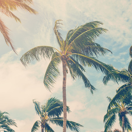 caribbean: coconut plam tree on beach of nature background in vintage style Stock Photo