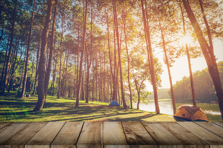 Foresta dell'albero di pino e pavimento in legno della plancia con alba. Stile vintage.