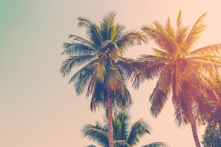 nature of sunlight: Coconut palm tree with vintage effect. Stock Photo