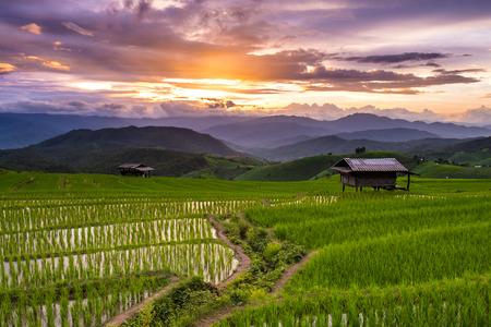 pa: Green Terraced Rice Field in Pa Pong Pieng , Mae Chaem, Chiang Mai, Thailand