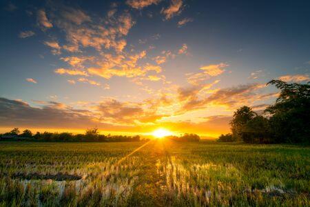 Natürliches szenisches Schönes Reisfeld und Sonnenuntergang in Thailand.