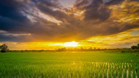 Panorama naturel scénique beau coucher de soleil et fond agricole de champ de riz Banque d'images