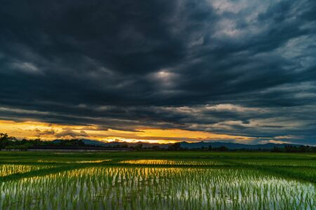 Natural scenic beautiful field sunset and storm clouds and green field agricultural background Фото со стока