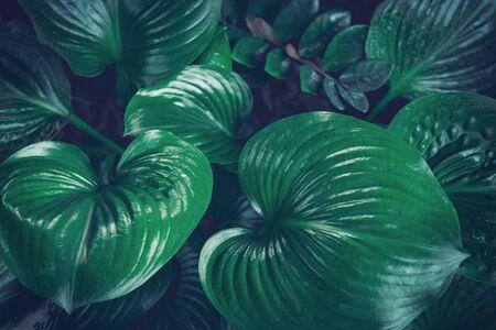 Leaf tropical foliage nature dark green background