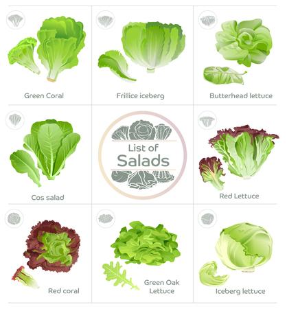 Lista warzyw sałatkowych i ikony wektora. Popularne jedzenie sałaty. Produkt do systemu hydroponicznego.
