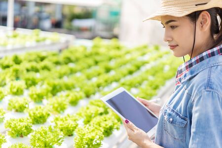Asian farmers in hydroponic vegetables salad farm. She is using applications from the tablet. Stock Photo