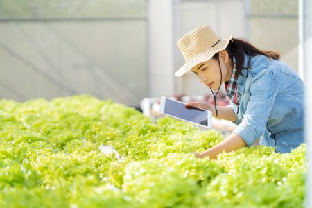 Asian farmers in hydroponic vegetables salad farm. She is using applications from the tablet. Banco de Imagens