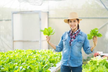 Asian farmers holding  hydroponic vegetables salad farm.