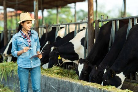 Farmer have recording details on the tablet of each cow on the farm. Stock fotó - 129845629