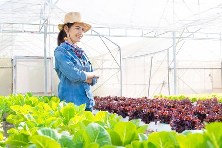 Asian farmers at hydroponic vegetables salad farm.