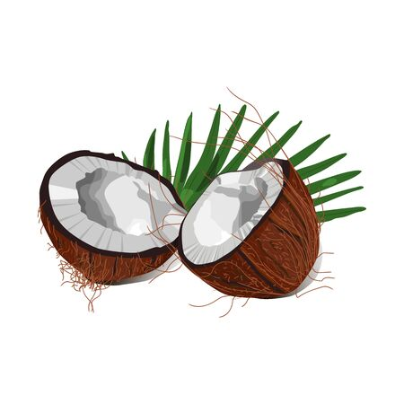 two pieces of coconut with palm leaf. vector illustration. isolated on white background. Ilustrace