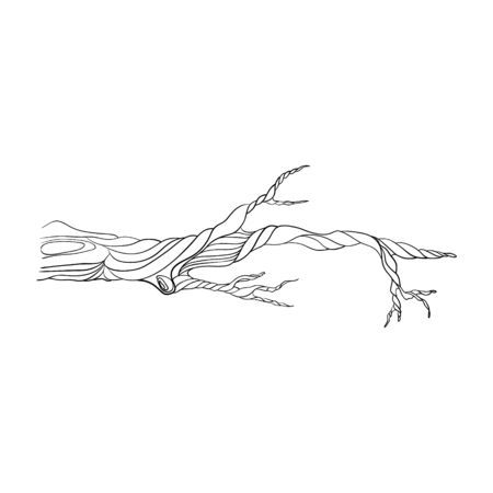 one stylized tree branch. isolated on a white background. Hand drawing sketch. Ilustracja