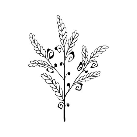 leaf plant forest herb. one stylized branch. isolated on a white background. Hand drawing sketch.