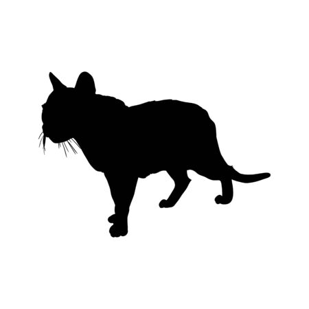 black cat silhouette .Isolated on the white background. hand drawn.