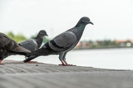 group of pigeons on a pier.