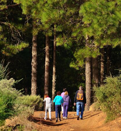 naturalist: Hikers walking along the forest
