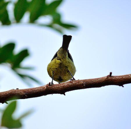 instincts: Back of bird blue tit on a branch