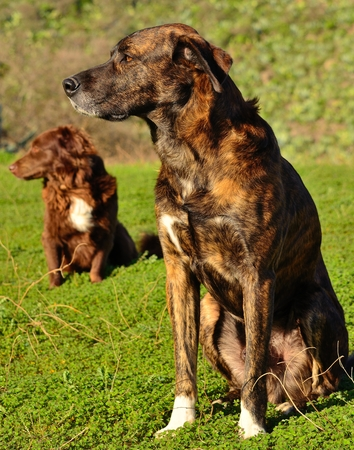 Dogs sitting Imagens - 35694868