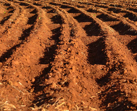 preparatory: Grooves on the land for agricultural crop Stock Photo
