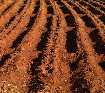 cropland: Grooves on the land ready for cultivation