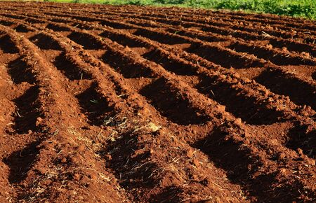 agrarian: Prepared land for cultivation
