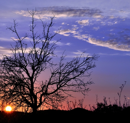 Spectacular sky at sunrise with autumnal almond tree in foreground photo