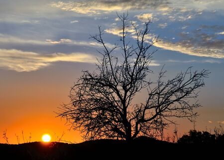 rosales: Awesome sky at dawn, intense sun and autumnal almond tree